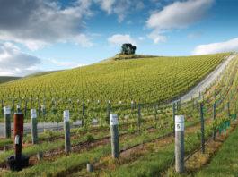 Blanc Vineyards