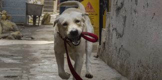 Delhi Man killed after argument over leaving pet dog